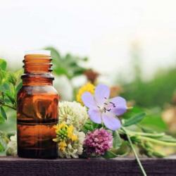 AVS du 25-01-2020 : Renforcer notre corps grâce à la naturopathie - Loïc Ternisien